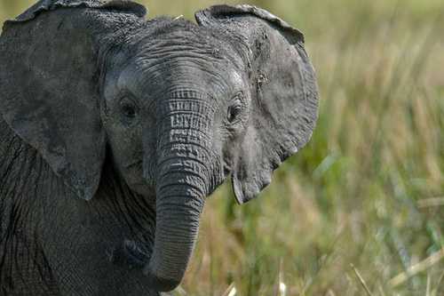 orphaned and abandoned elephant calves
