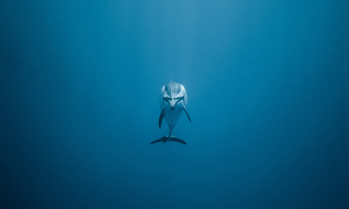 O'Dyssey protect the oceans