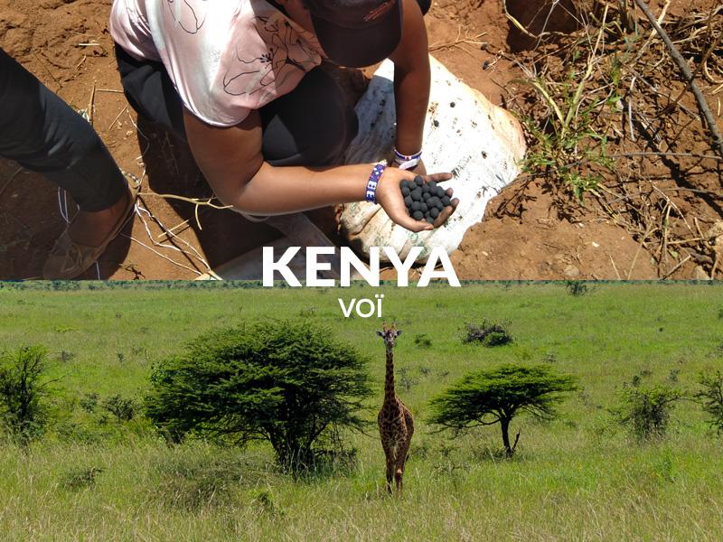Planting trees seedballs Voi Kenya