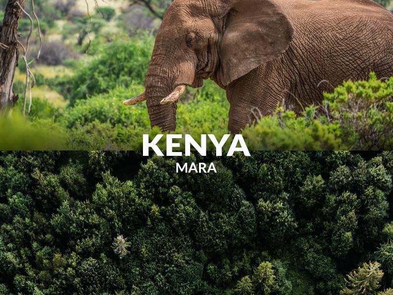 Planting trees in Kenya