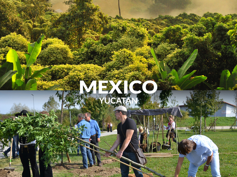 Planting trees in Mexico